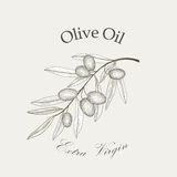 Olive tree branch with olives isolated sketch  Royalty Free Stock Image