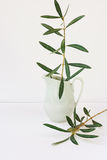 Olive tree branches in pitcher, white background, mockup, styled image for social media