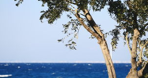 Olive tree branches by the sea on the background stock video