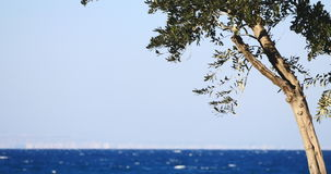 Olive tree branches by the sea on the background stock video footage