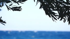 Olive tree branches by the sea on the background stock footage