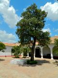 Olive tree in the central courtyard of a colonial house Royalty Free Stock Images