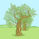 Olive tree in countryside vector illustration