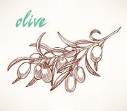 olive tree för filial stock illustrationer