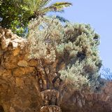 Olive tree growin on the stone walkway roof in Park Guell, Barcelona, Spain stock photography