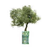 Olive tree growing from euro bill stock photography