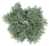 Olive tree isolated on white. top view vector illustration
