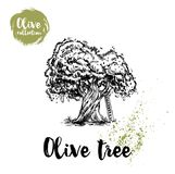 Olive tree with ladder hand drawn poster. Old looking vector artwork. Great for cosmetic creams designs, labels, flyers. Farm fresh products royalty free illustration