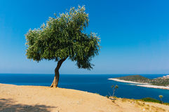Olive tree. Landscape with a lonely olive tree in Greece stock photography