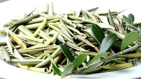 Olive tree leaves,  dried leaves. Olive tree leaves, drug to lower blood pressure, dried leaves on a turn table stock video footage
