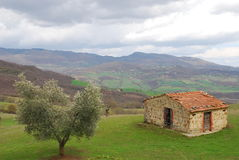Olive Tree and Old Hut in Tuscany Royalty Free Stock Photography