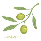 Olive tree. Olive oil. Green olive. vector. Stock Image