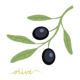 Olive tree. Olive oil.  illustration. Royalty Free Stock Photos