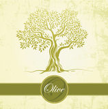 Olive tree. Olive oil. Vector  olive tree on vintage paper.For labels, pack. Royalty Free Stock Photography