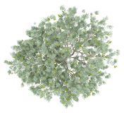 Olive tree with olives isolated on white. top view vector illustration
