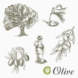 Olive tree, olives and oil Stock Image