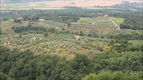 Olive tree orchard stock video