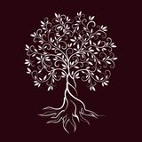 Olive tree outline curl silhouette icon Stock Photo