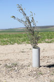 Olive tree plant protected by PVC Royalty Free Stock Photography