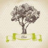 Olive tree. Retro hand drawn illustration Royalty Free Stock Images