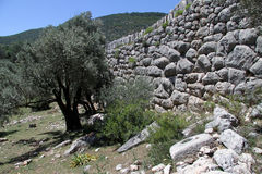 Olive tree and ruins Royalty Free Stock Image