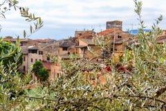 Olive tree in San Gimignano, Tuscany, Italy Stock Photos