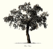 Olive Tree silhouette royalty free illustration
