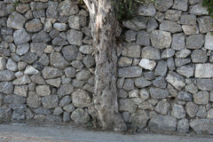 Olive tree and stone wall Royalty Free Stock Photos