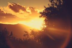 Olive tree sunset Royalty Free Stock Image