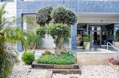 The olive tree symbol of fertility with cut into 3 parts crown decorating the entrance to the apartment building. Ness Ziona, Israel-May 21, 2017: The olive tree stock photos