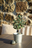 Olive tree on table 7 Stock Photos
