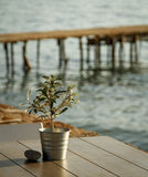 Olive tree on table 1 Royalty Free Stock Image