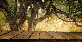 Olive tree with table Royalty Free Stock Photos