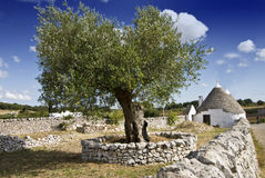 Olive tree and trullo Royalty Free Stock Photos