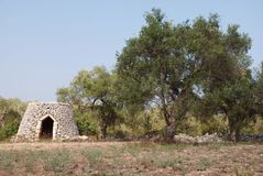 Olive Tree and Trullo Stock Photos