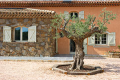 Olive tree and typical small vineyard chateau Stock Photography