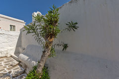 Olive Tree and Typical white house in town of Parakia, Paros island, Greece Royalty Free Stock Photography