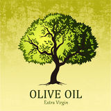 Olive tree. Vector green tree.yellow green leaves Royalty Free Stock Photos