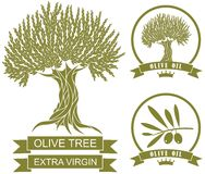 Olive tree. Vector illustration (EPS 10 Stock Image