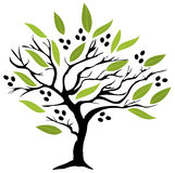 Olive Tree. Vector illustration of an olive tree with olives stock illustration