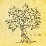 Olive tree on vintage paper Royalty Free Stock Images