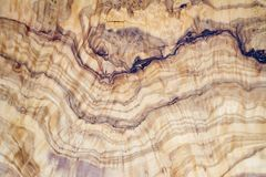 Olive tree wood slice with texture and details.  Royalty Free Stock Image