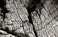 Olive tree wood texture Royalty Free Stock Photography
