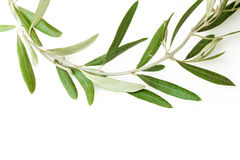 Olive tree wreath Royalty Free Stock Photos