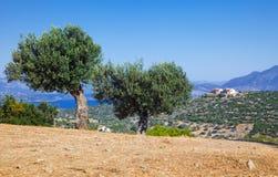 Olive trees. On Poros, Greece Stock Photos
