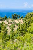 Olive trees and Aegean Sea. Stock Photography