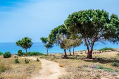 Olive trees in Archaeological park at Kato Paphos Stock Photos