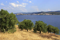 Olive trees on background of town Neos Marmaras. Royalty Free Stock Images