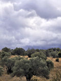 Olive trees and a cloudy sky stock photos