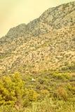 Olive Trees - Croatia - vingage version Royalty Free Stock Photography